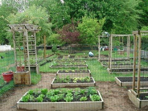 Backyard Garden  56