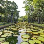 Botanical gardens for plant preservation