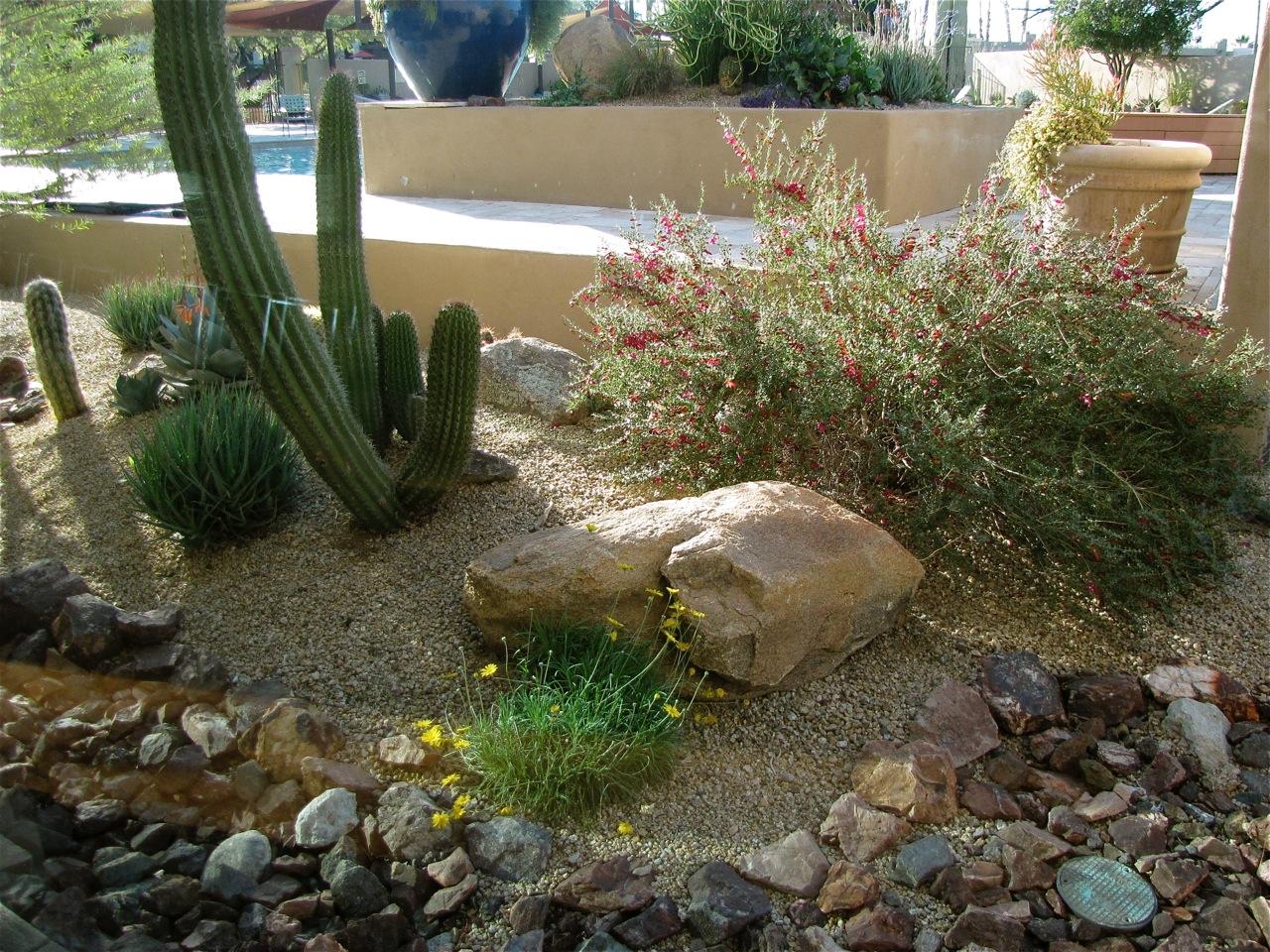 desert landscaping 92