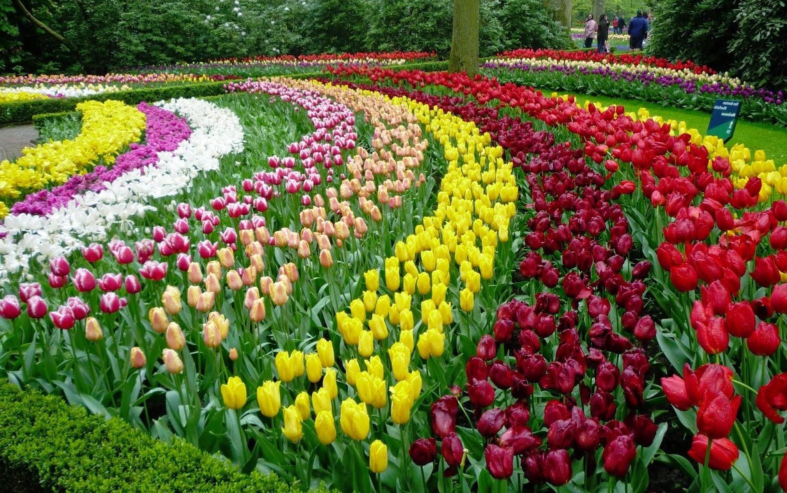 Flower garden  29
