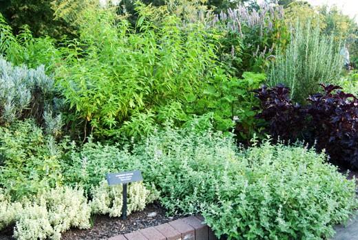 herb garden  63