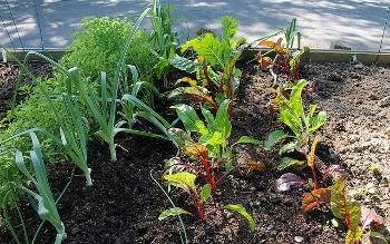 home gardening  09