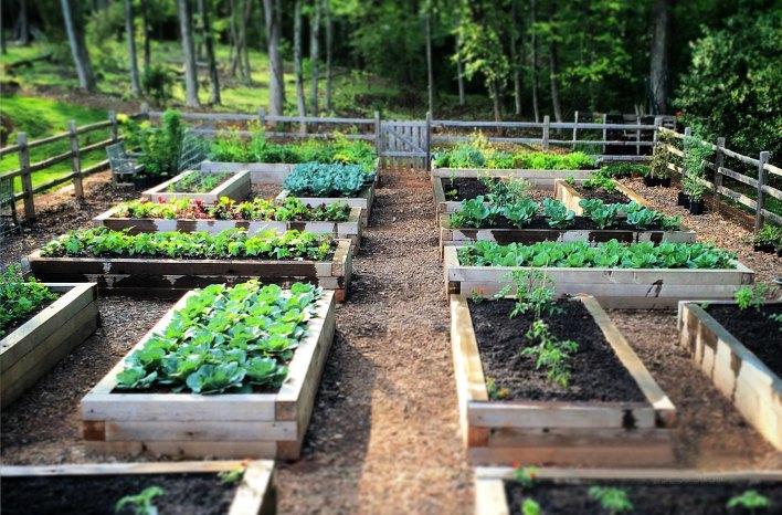 Raised Bed Garden  60