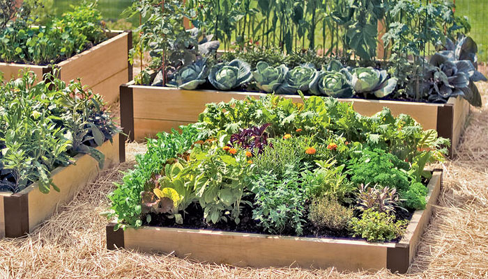 Raised Bed Garden  97