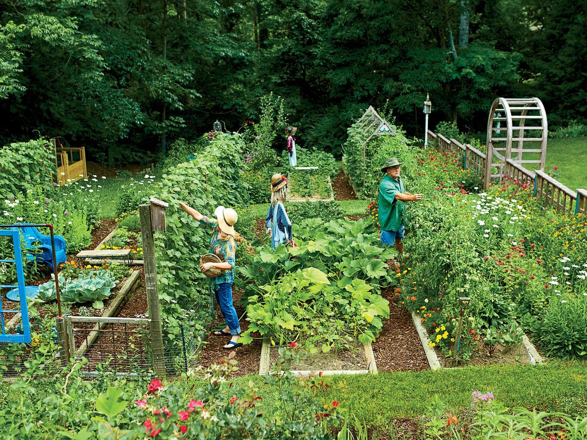 vegetable garden  40
