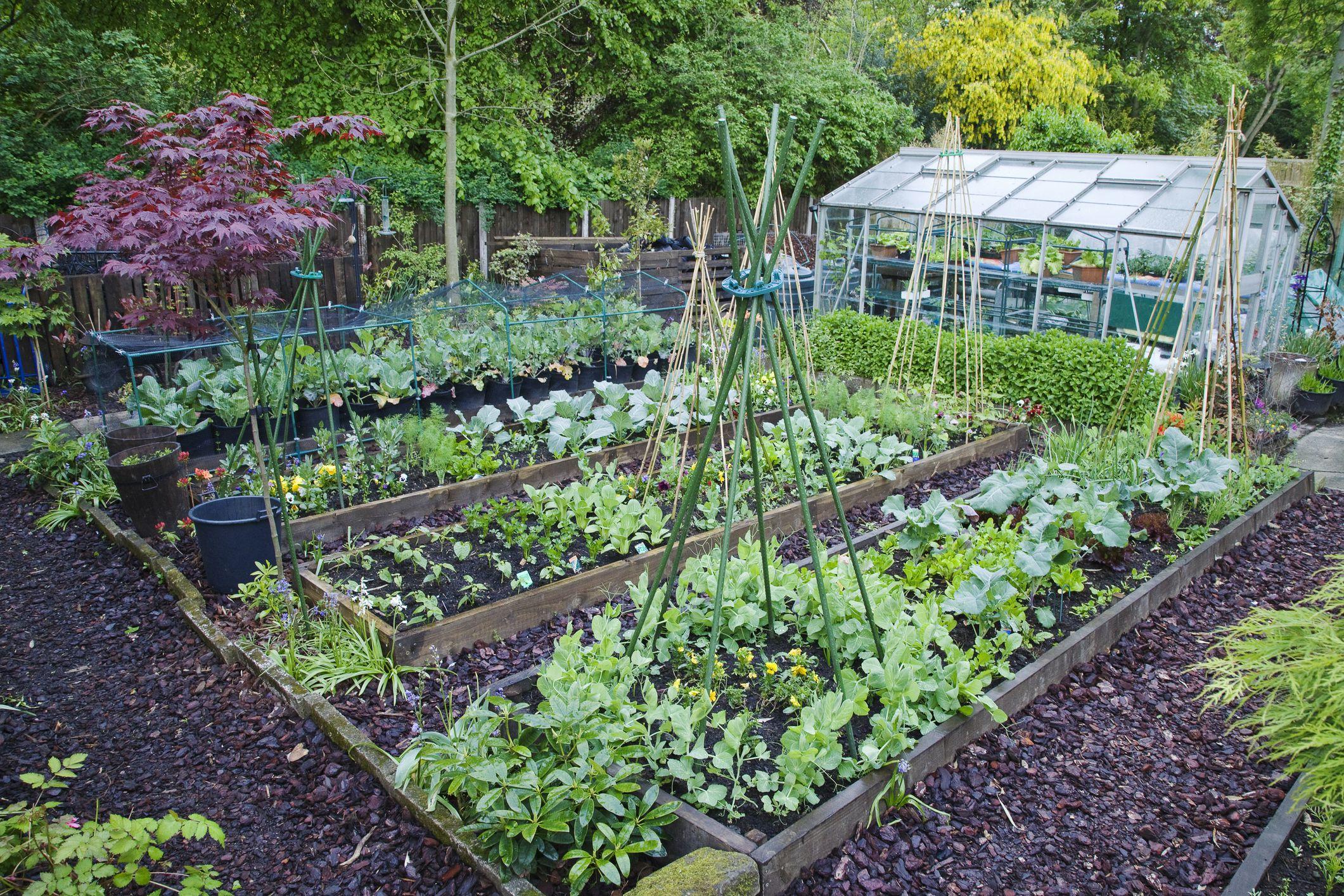 vegetable garden  65