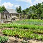 Best vegetable garden ideas for you